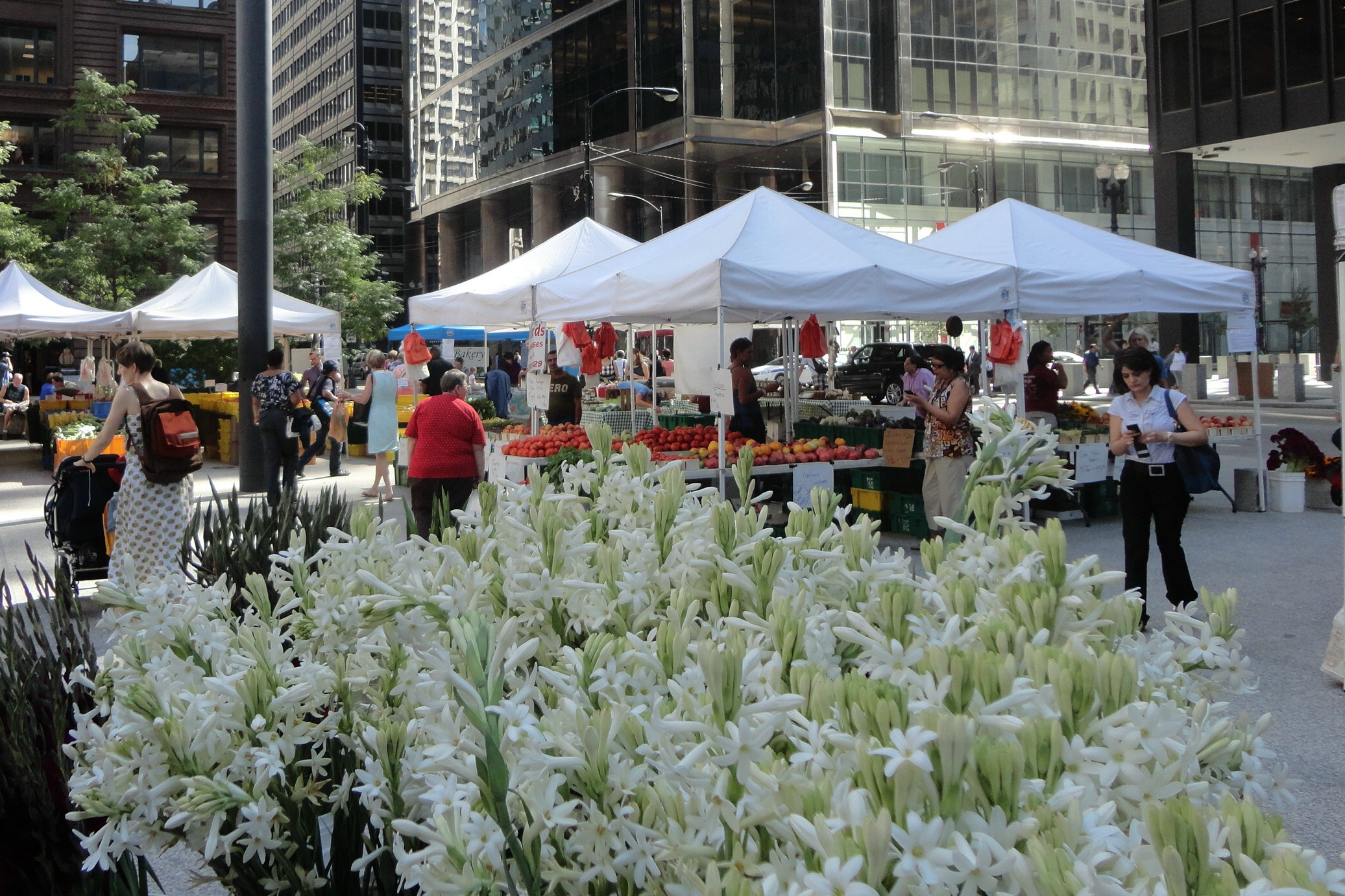 Downtown Chicago Farmer's Market