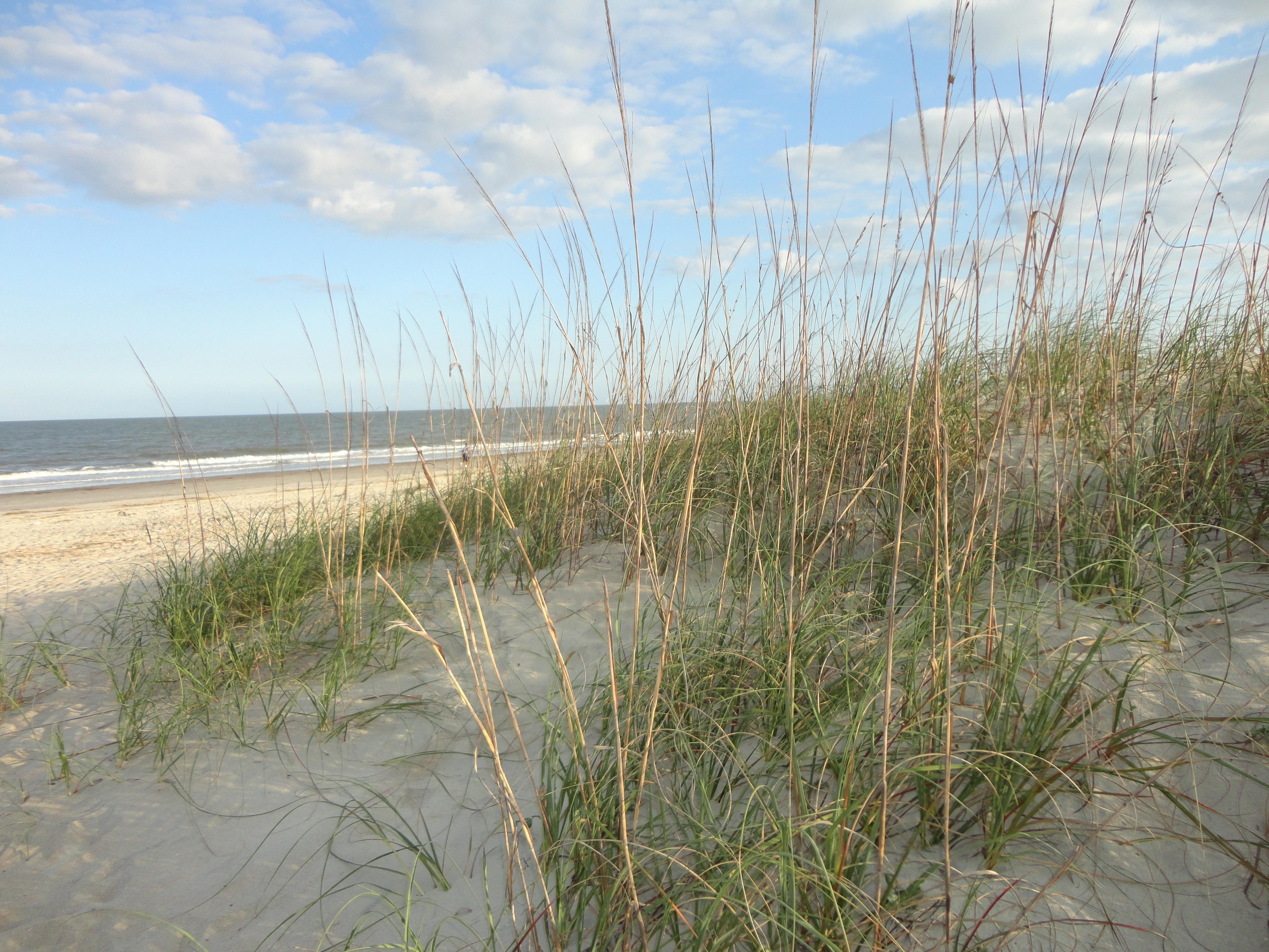 Tybee Island's sandy shores