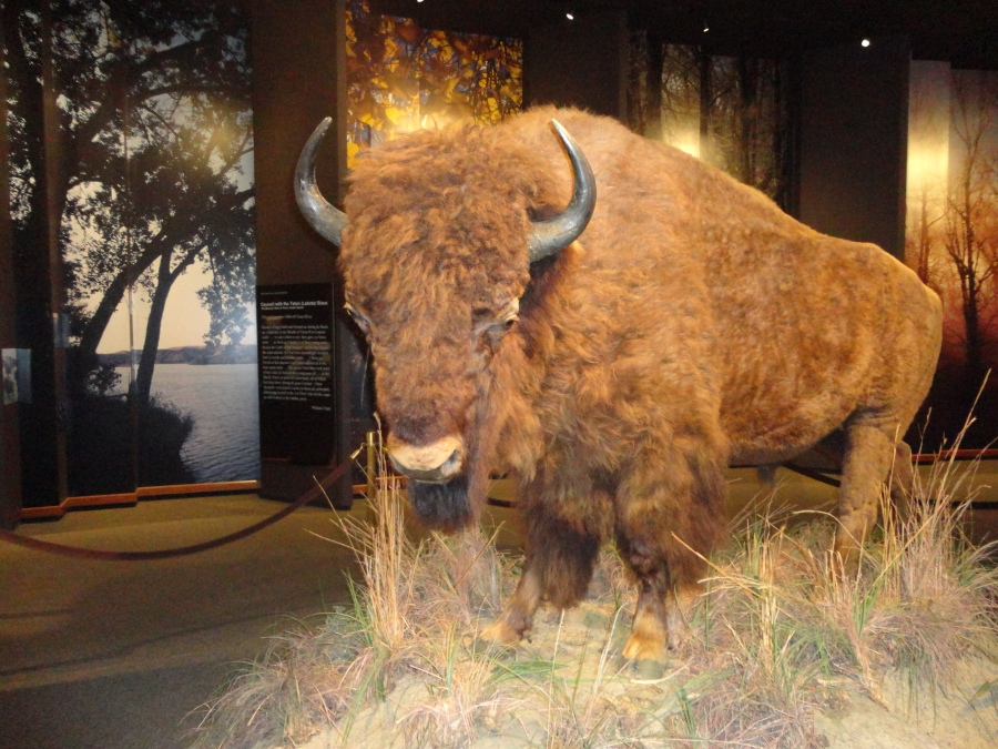The Museum of Westward Expansion gets harry!