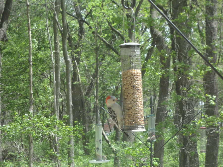 Margery Adams Wildlife Sanctuary, an urban oasis